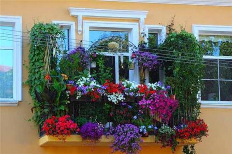 Мой балкон – цветущий оазис