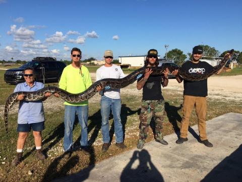 Во Флориде поймали питона, способного убить человека