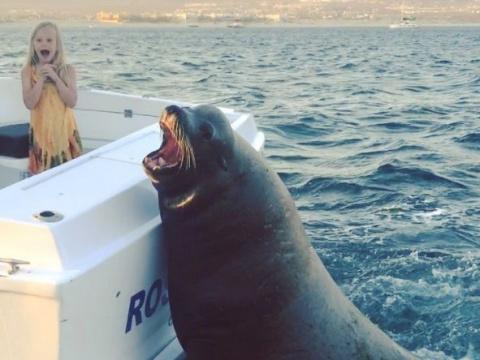 Рэкетир животного мира — тюлень залез в лодку прямо на ходу, чтобы поклянчить рыбку