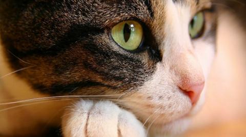Животные — телепаты?