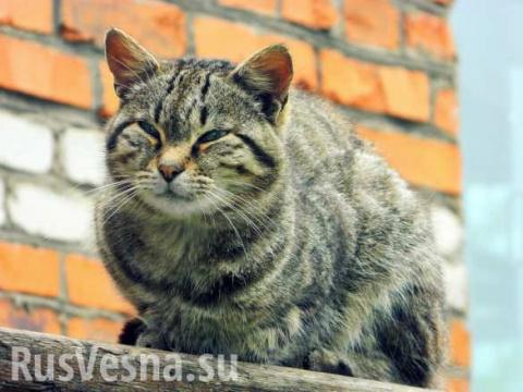 Бездомный кот спас ребёнка от холода