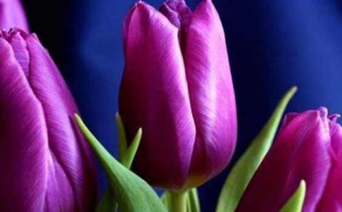Философия фиолетового цвета