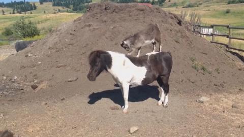 Угарные кони, смешные собаки и кошки