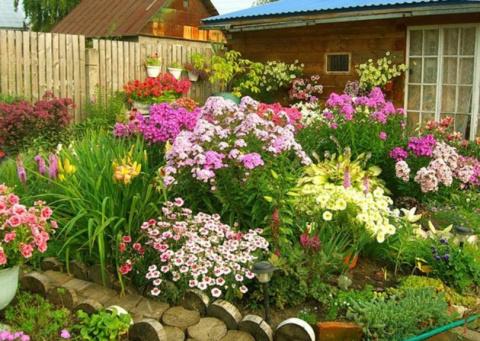 Цветы, которые необходимо сеять на рассаду уже в январе