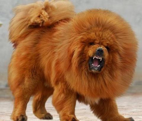 Продана самая дорогая собака в мире!