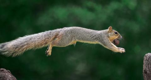 Как белки сортируют орехи в тайниках