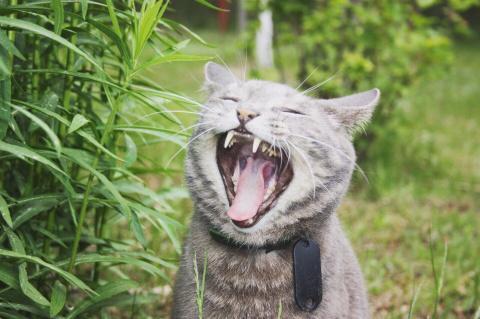 Кот храброе сердце