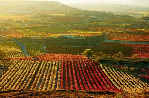 Экскурсии виноградниками на …