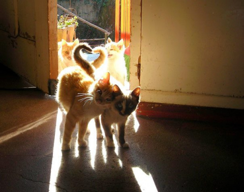 Кошачья любовь
