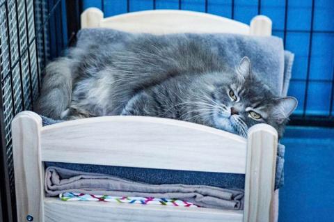 IKEA жертвует кукольные кроватки приюту для кошек, и это чудесно.