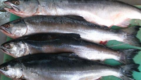 Карельские рыбаки пожаловались на проблемы с получением разрешений