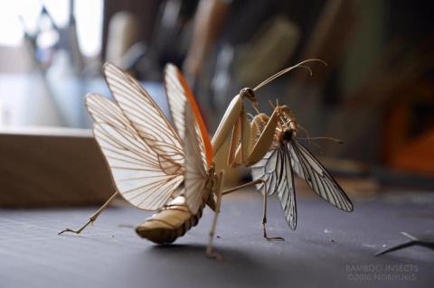 Удивительные насекомые из ба…