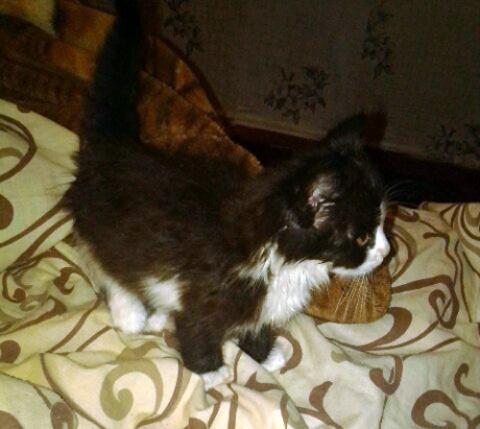 Увидела во дворе, как какая-то женщина с силой бьёт котёнка