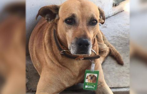 В Бразилии собака стала работником месяца на местной заправке