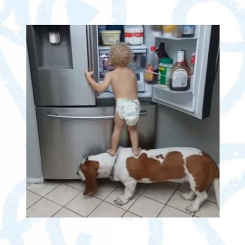 Соучастники ограбления холодильника