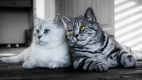 Сколько живут кошки и как пр…