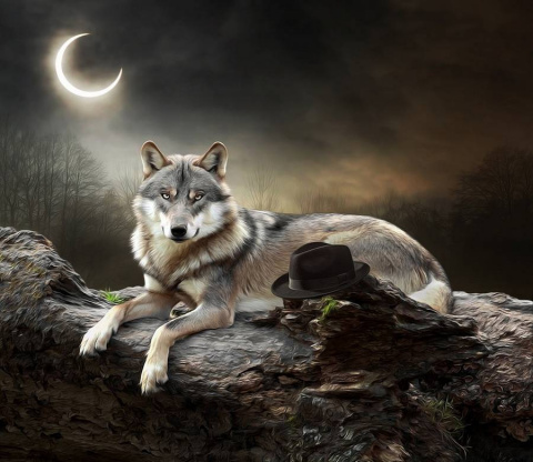 Мир животных от Murat Sayginer