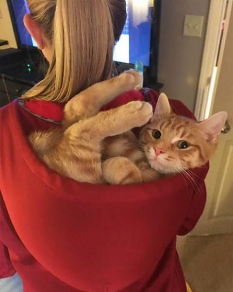 Коты, которым везде удобно