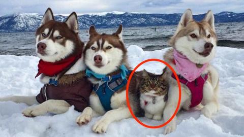 Кошка, которую спасли и выра…