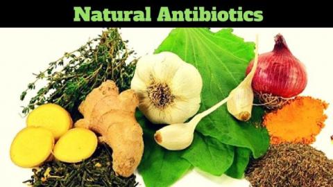 Природные антибиотики, используемые старшими людьми вместо таблеток
