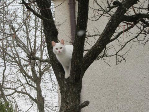 Раз в жизни белоснежный кот …