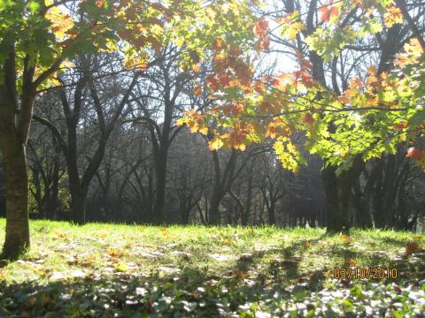 Осенний Минск. Парк по ул. Шишкина.
