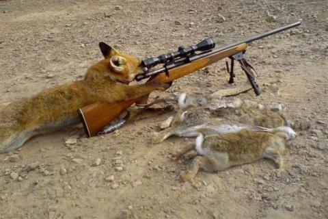 Приколы на охоте 2.0: фото