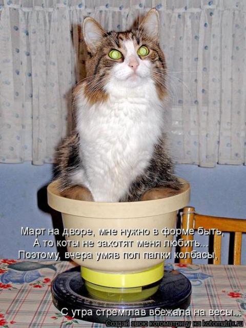 Взвесить кота... Логика.