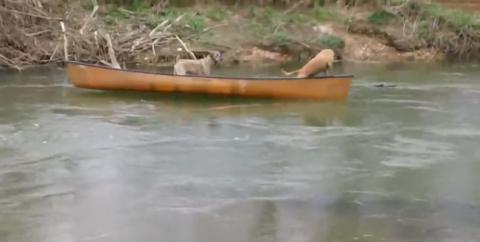 Две собаки неслись в лодке п…