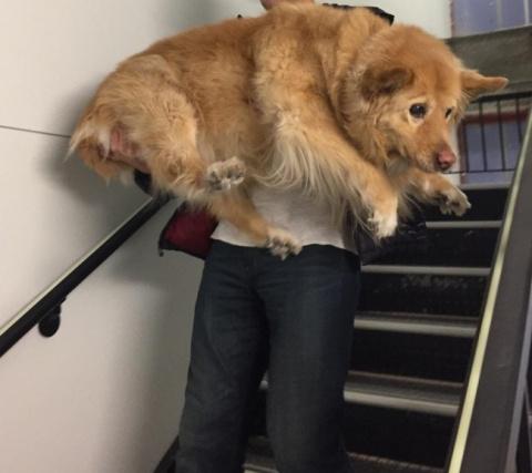Собаки, на самом деле, остаю…