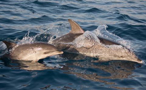 Страшные тайны дельфинов