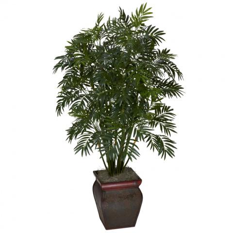 Эти растения — природные очи…