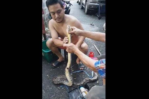 Тайский фермер «заштопал» пробравшегося в курятник раненого удава