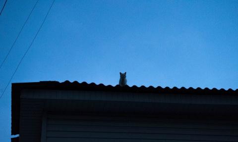Кот, обманутый вкусными запа…