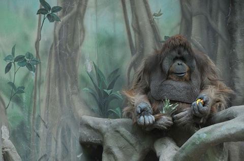 Животные правила. Жизнь питомцев зоопарка в вопросах и ответах