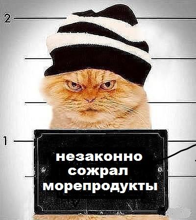 Кот съел морепродуктов более чем на $1 тысячу в аэропорту Владивостока