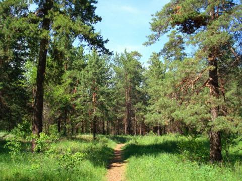 Летний день в лесу