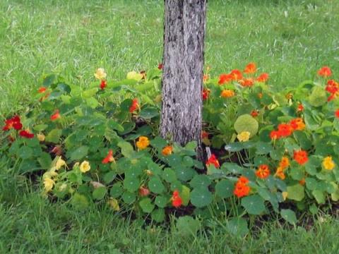 Что можно посадить под деревьями в саду?