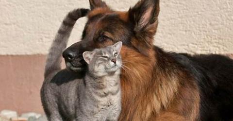 Благодарность кота не знает границ