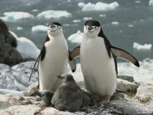 Почему Южный полюс холоднее …