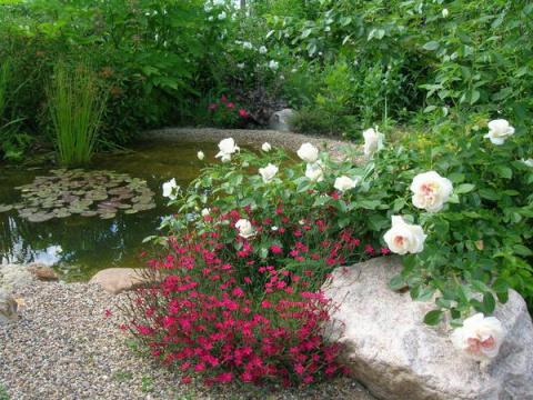 Оформление садового водоема растениями, или Стоит ли сажать розу на берегу