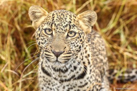 Леопардик Поли. Часть 3