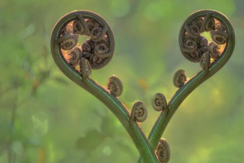 Природа напоминает нам о любви