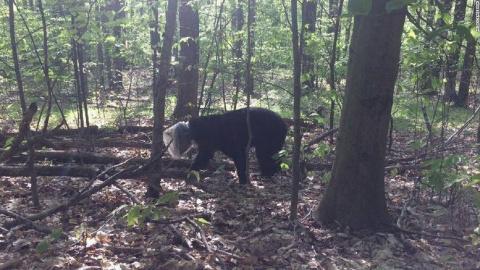 Медведя освободили из пластмассового контейнера, в котором он проходил месяц
