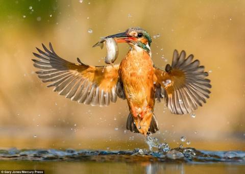 Фотоохота на зимородка окончилась невероятным успехом!