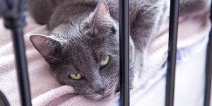Дрессировка котят и кошек...