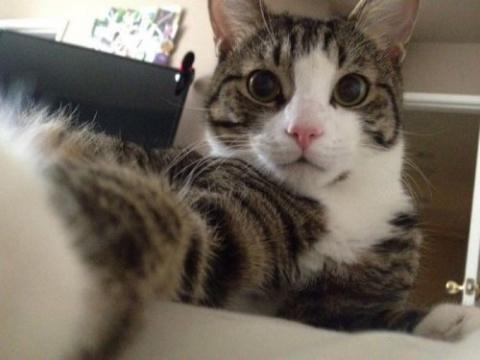 Кошки-хакерши, которые ввели…