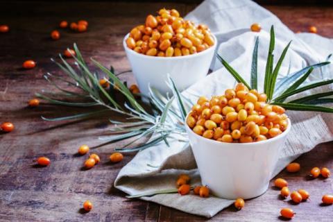Оранжевое чудо - облепиха: полезны не только ягоды, но и листья!