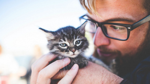 Животные заговорят как люди через 10 лет