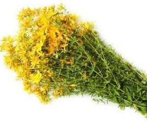 Фитотерапия при простатите: 10 общедоступных и эффективных лекарственных трав
